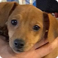 Adopt A Pet :: Nathan - Georgetown, KY