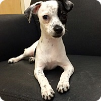 Adopt A Pet :: Moon Child - Mission Viejo, CA