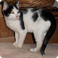 Adopt A Pet :: Parker - Chattanooga, TN