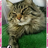 Adopt A Pet :: Tomsin - Edwards AFB, CA