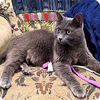 Adopt A Pet :: Jackson - Vancouver, BC