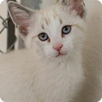 Adopt A Pet :: Ming - Greenwood, SC