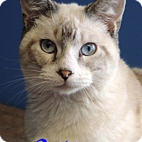 Adopt A Pet :: Victor - Brookings, SD