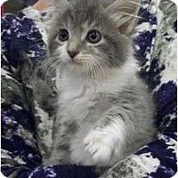 Adopt A Pet :: Louisa - Reston, VA
