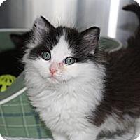 Adopt A Pet :: Laddie - Armuchee, GA