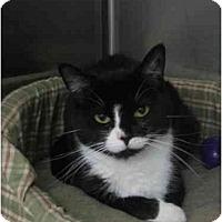 Adopt A Pet :: Shadow - Greenville, SC