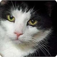 Adopt A Pet :: Jelly Bean - Secaucus, NJ