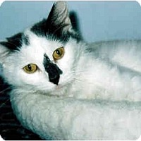 Adopt A Pet :: Kelly - Medway, MA