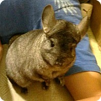 Adopt A Pet :: Speedy & Chunky - Granby, CT