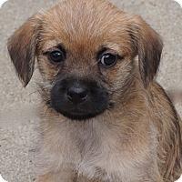 Adopt A Pet :: Pansy - La Habra Heights, CA