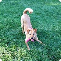 Adopt A Pet :: Ruby - Glen Burnie, MD