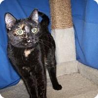 Adopt A Pet :: Archer - Colorado Springs, CO