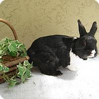 Adopt A Pet :: Enzo - Bonita, CA