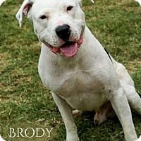 Adopt A Pet :: Brody - Columbia, TN