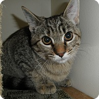 Adopt A Pet :: Rio - Milwaukee, WI