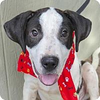 Adopt A Pet :: Sully - Baton Rouge, LA