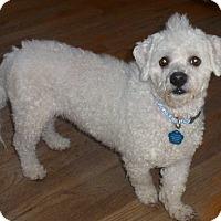 Adopt A Pet :: Louie-Pending Adoption - Omaha, NE