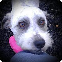 Adopt A Pet :: Ringo - Oakley, CA
