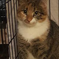 Adopt A Pet :: Amber - Stafford, VA