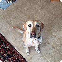 Adopt A Pet :: Daisy #3 - Midlothian, VA