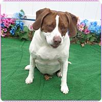 Adopt A Pet :: CHLOE & COOKIE available 3/29 - Marietta, GA