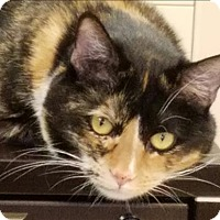 Adopt A Pet :: Chantel - Sherwood, OR