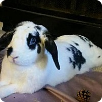 Lop-Eared Mix for adoption in Los Angeles, California - Lui