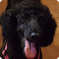 Adopt A Pet :: RAVEN - Smithfield, PA