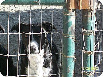 Terrier (Unknown Type, Medium)/Labrador Retriever Mix Dog for adoption in Mexia, Texas - Ruby
