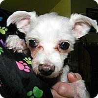 Adopt A Pet :: Dakota - South Amboy, NJ