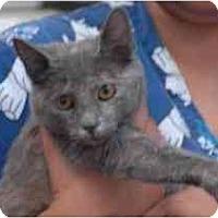 Adopt A Pet :: Ashes - Miami, FL