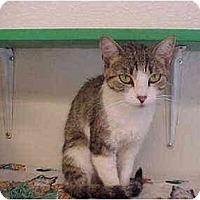 Adopt A Pet :: Mummies - El Cajon, CA