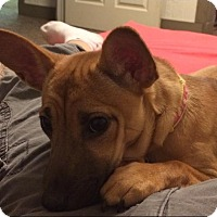 Adopt A Pet :: Sage - Acme, PA