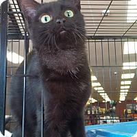 Adopt A Pet :: Felix (PB) - Exton, PA
