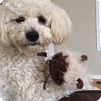 Adopt A Pet :: Milou - Pierrefonds, QC