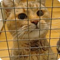 Adopt A Pet :: Dinah - Morganton, NC