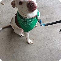 Adopt A Pet :: Diesel - Iowa Park, TX