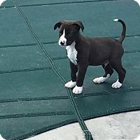 Adopt A Pet :: Mr. T - Hammonton, NJ