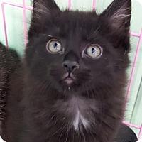 Adopt A Pet :: Olivia - Key Largo, FL