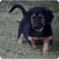 Adopt A Pet :: Gabby - Adamsville, TN