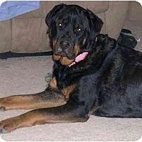Adopt A Pet :: Skylla - Chandler, IN