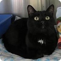 Adopt A Pet :: Ozzie - Prescott, AZ