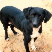 Adopt A Pet :: Friday - Poughkeepsie, NY