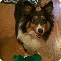 Adopt A Pet :: Dundee (Adoption Pending_ - Pittsburgh, PA