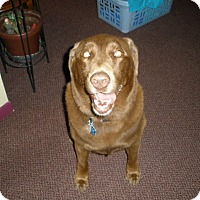 Adopt A Pet :: Riley - Acushnet, MA
