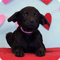 Adopt A Pet :: Xmas - Waldorf, MD