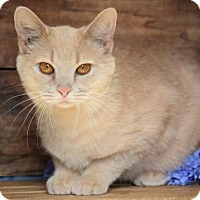 Adopt A Pet :: Prancer - Germantown, MD