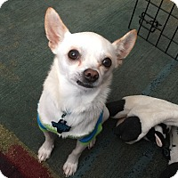 Adopt A Pet :: Frankie - New Braunfels, TX
