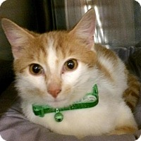 Adopt A Pet :: Willie - Greensburg, PA