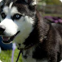 Adopt A Pet :: Issac - Harvard, IL